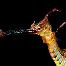 Seadragon Portrait by MattTworkowski