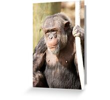 Hmmm Chimpanzees thats all I see Greeting Card