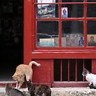 The Cats of Mt Athos. Greece by SeanD2010