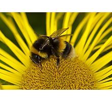 Clean bee Photographic Print