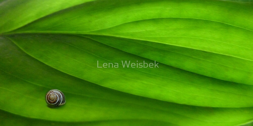 In the Green V by Lena Weiss