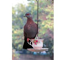 Another dove Photographic Print