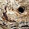 Macro Dead Wood Patterns & Textures  $20 RB Voucher
