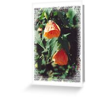 Hybiscus Flowers Greeting Card