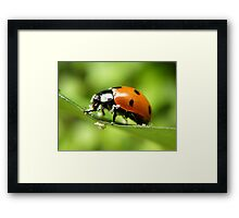 Knee deep in pollen... Framed Print