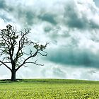Tree in the Cotswolds by Alexander Kok