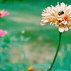 Bumblebee Bed by Ainsley Kellar Creations