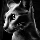 Black Cat by Karen Duffy