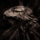 Eagle Eye by pther