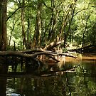Cedar Creek 1 by ericb
