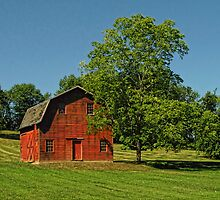 A Barn and Its Tree by Pamela Phelps