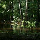 Cedar Creek 2 by ericb