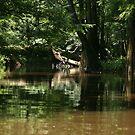 Cedar Creek 3 by ericb