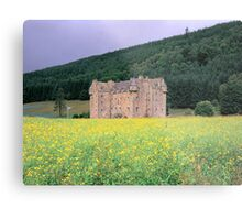 Through the Rapeseed Metal Print