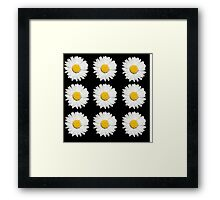 Nine Common Daisies Isolated on A Black Backgound Framed Print