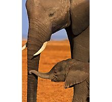Elephant Mother and Calf, Amboseli National Park, Kenya. Africa. Photographic Print