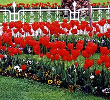 Red tulips,Tulip festival,Istanbul by califpoppy1621