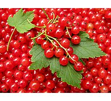 Market: Red currant  Photographic Print