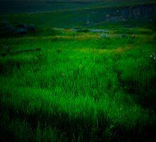 Twighlight Grasslands by tuffcookie