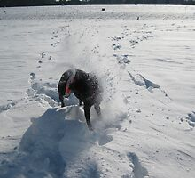 Death of a frisbee in snow by Nick Chase