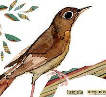 Luscinia megarhynchos (Nightingale) by Carol Kroll