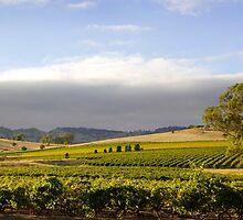 Barossa Valley Landscape by John Wallace