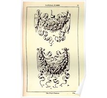 A Handbook Of Ornament With Three Hundred Plates Franz Sales Meyer 1896 0077 Natural Forms Fruit Festton Poster
