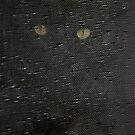 Cats by jude walton