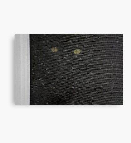 black cat, screen window Canvas Print
