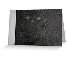 black cat, screen window Greeting Card