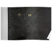 black cat, screen window Poster