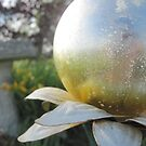 Silver Ball on Flower. by j3nb093