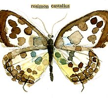 Castalius rosimon (Common Pierrot Butterfly) by Carol Kroll