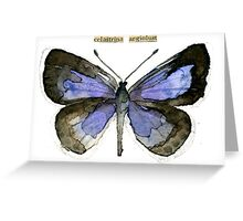Celastrina argiolus (Holly Blue Butterfly) Greeting Card