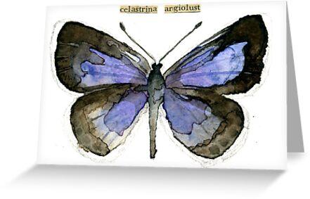 Celastrina argiolus (Holly Blue Butterfly) by Carol Kroll