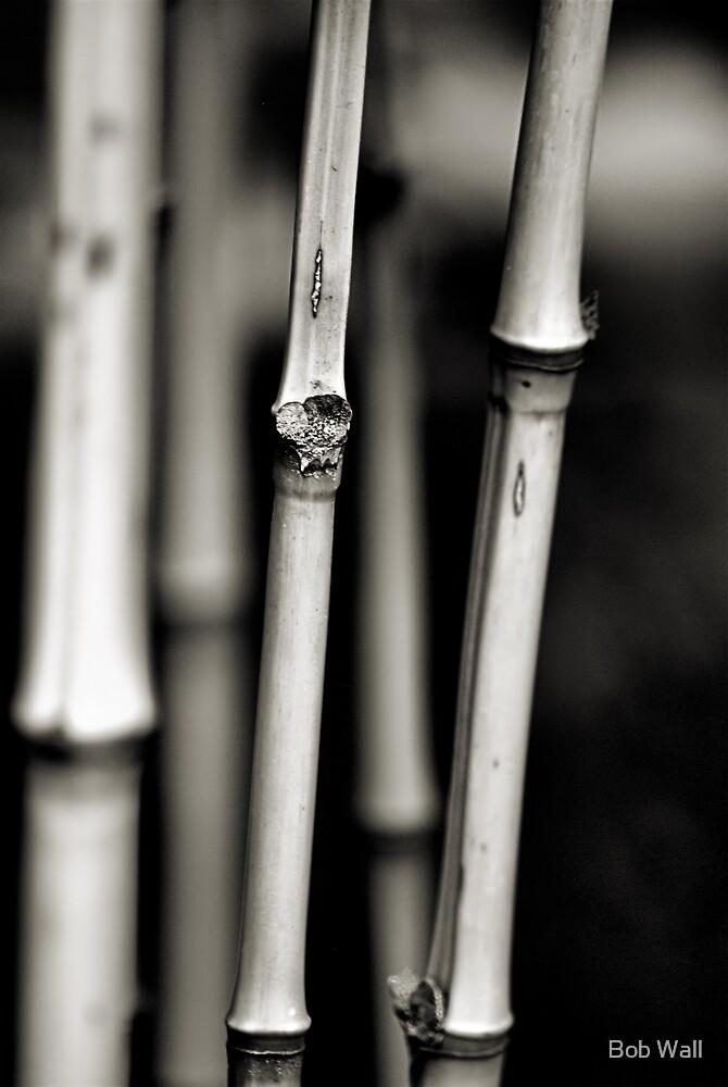 Bamboo in B&W by Bob Wall