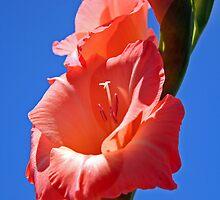 ~gladiola~ by Terri~Lynn Bealle