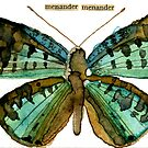 Menander menander (Blue Tharops Butterfly) by Carol Kroll