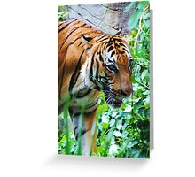 Tiger on the Prowl- Fort Worth Zoo Greeting Card