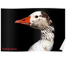 The Greylag Goose Poster