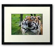 Whats up there, is it a bird I see or maybe............ Framed Print