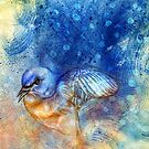 Eastern Bluebird by roxygen