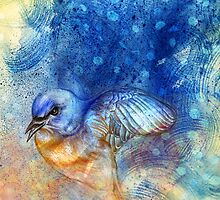 Eastern Bluebird by roxygen
