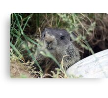 The Baby (Groundhog) Canvas Print