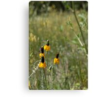 Prairie Flowers Canvas Print