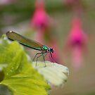 Dragonfly by naffarts