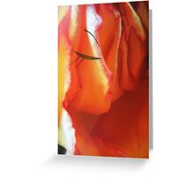 Ledy in red - woman face -natural world -red rose Greeting Card