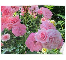 Pink Collective Climbing Roses Poster