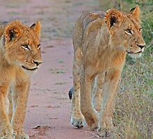 Young  siblings in synch(Do you you think dad will mind if we go down there?) by jozi1