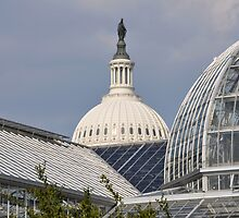 United States Botanical Gardens and the U.S. Capital by Matsumoto